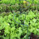 VINES FARMSHARES Available