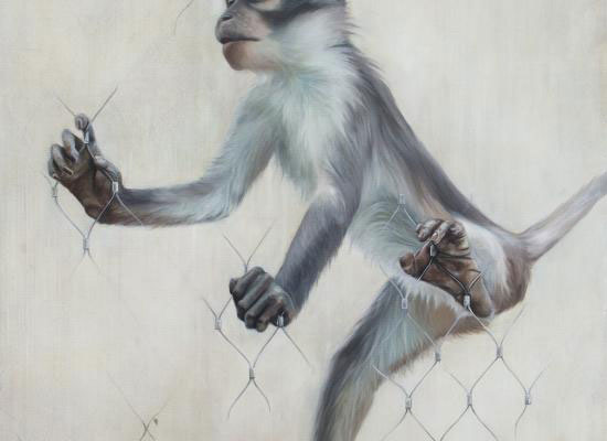 Mangabey by Caroline Fay